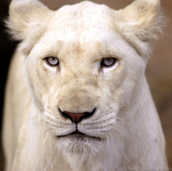¿CUÁL ES TU ANIMAL DE PODER? +++DESTACADO NOVIEMBRE 2014+++ 900fd494834ee68ab8861a909934ce4b66055